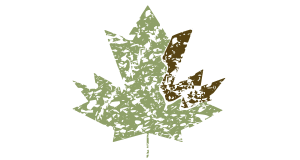 An illustrated Canadian maple leaf