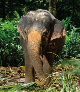Image of an elephant in Thailand