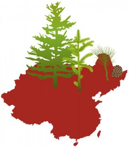 Illustration of China with forest coverage