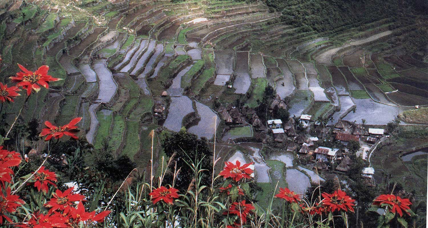 Trekking the Rice Terraces of Batad