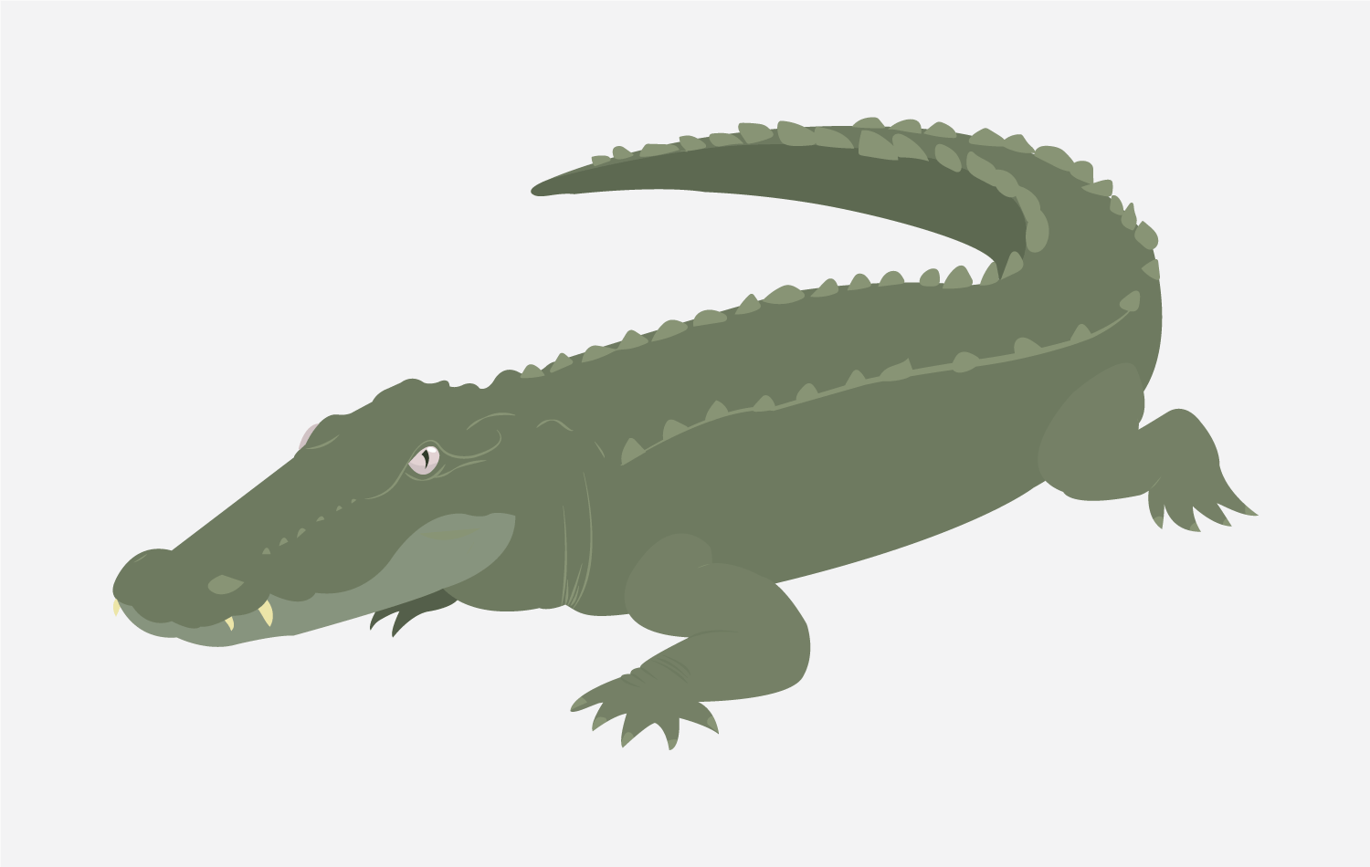 Alligator Illustration