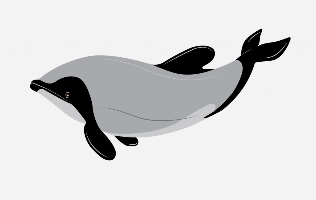 Dolphin Illustration