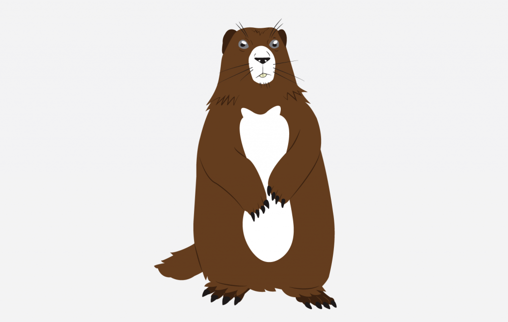 Marmot Illustration