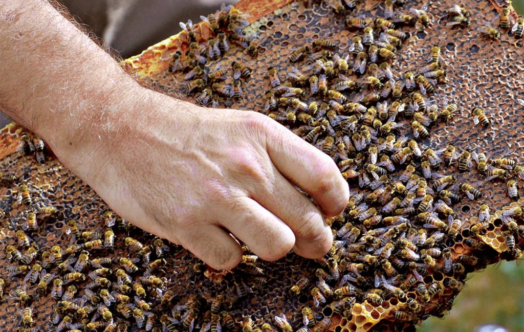 Image of man's hand picking up a bee.