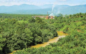Environment surrounding palm oil production