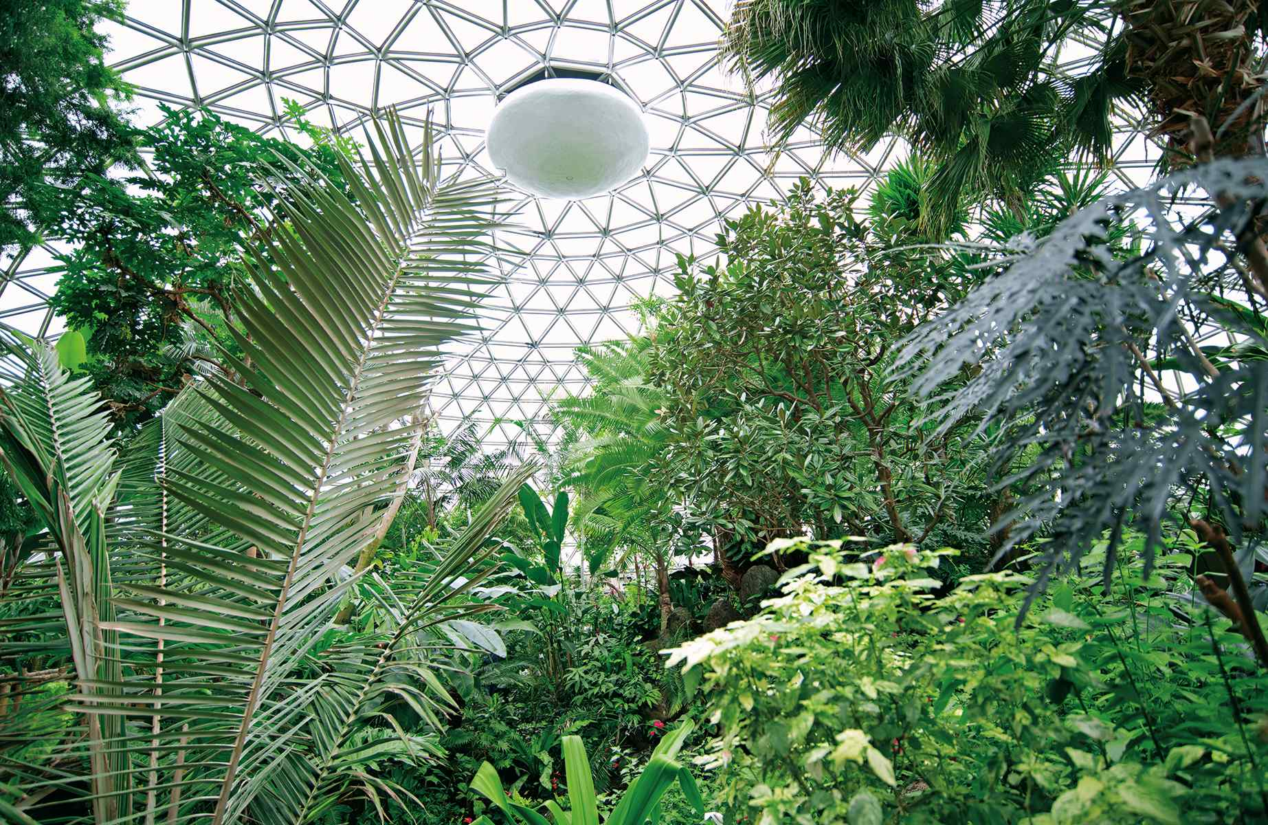 Bloedel Conservatory roof