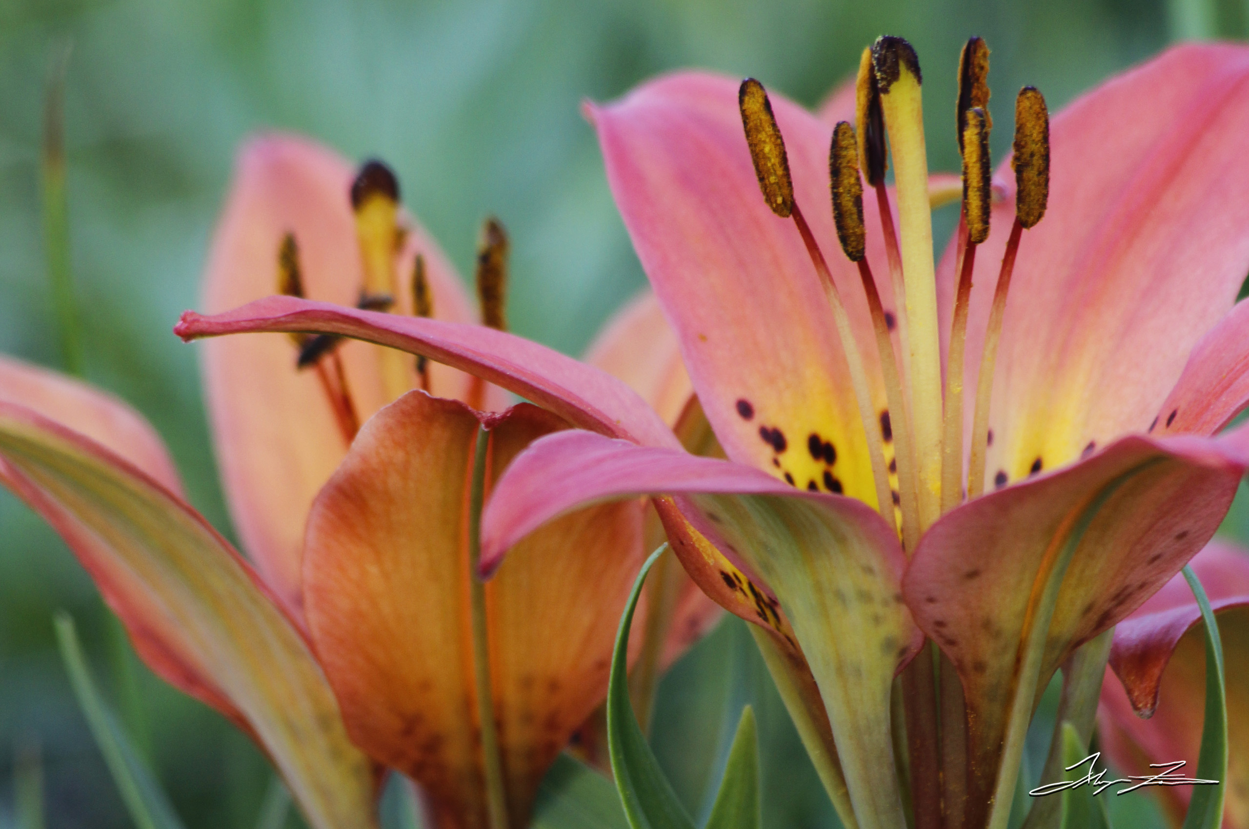 Flowers captured by photographer and DPUB student Alayna Fairman